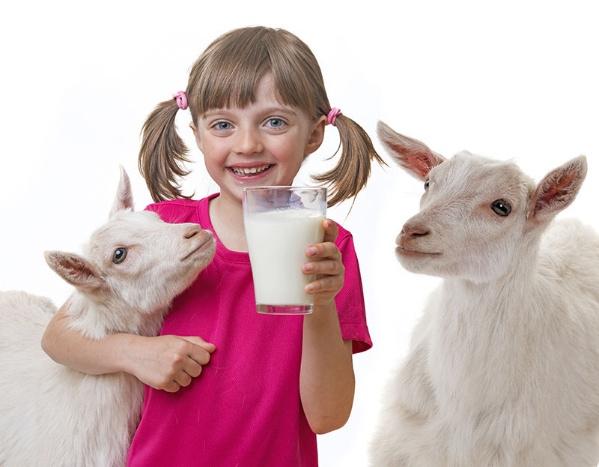Top 10 sữa dê nhập khẩu giúp bé phát triển tốt nhất hiện nay