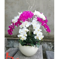 Chậu hoa lan